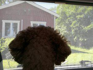 Aufmerksamer Hund